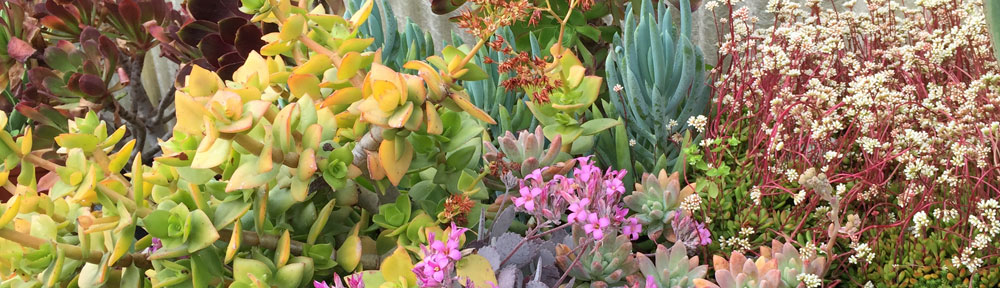 San Francisco Succulent & Cactus Society
