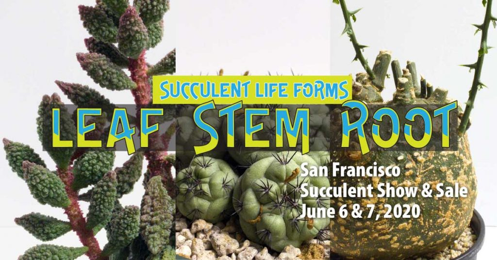 Succulentr Life Forms: LEAF STEM ROOT