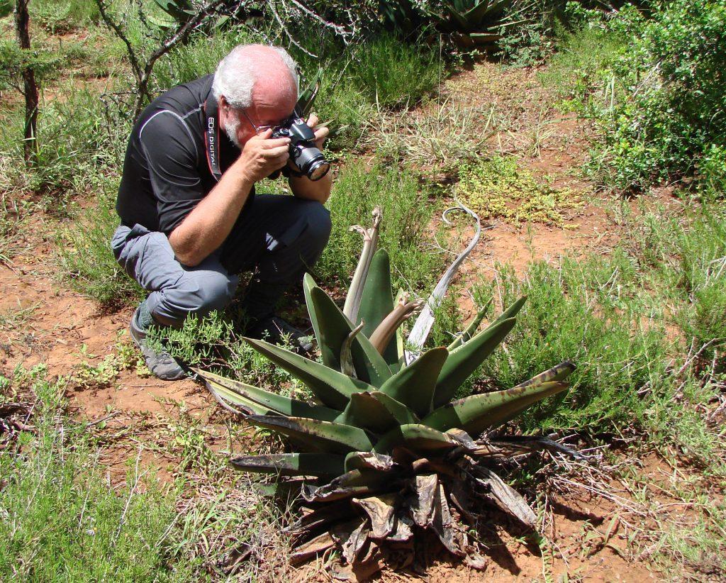 Tony Roberts photographing Gasteria exelsa in habitat