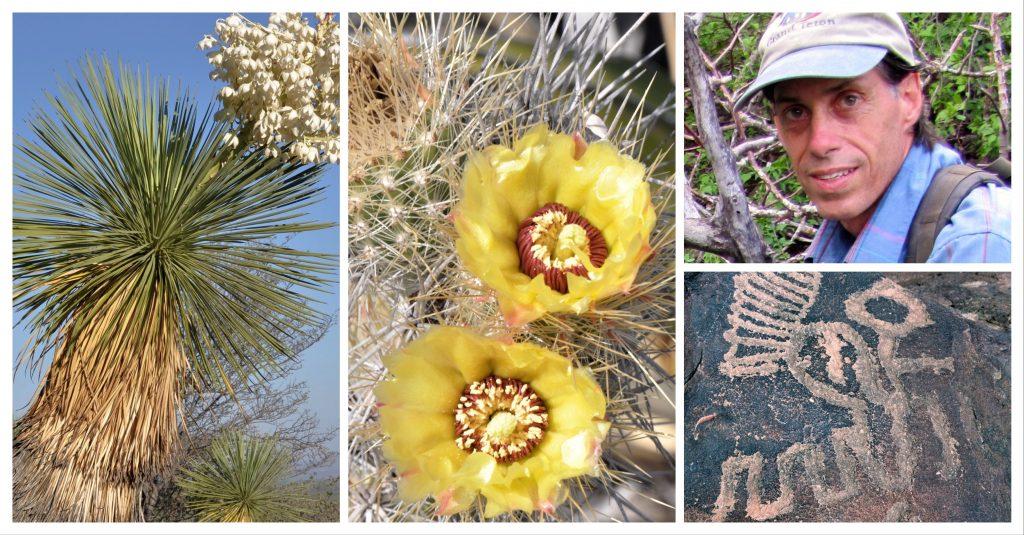 Brian Kemble Succulent plants in Coahuila
